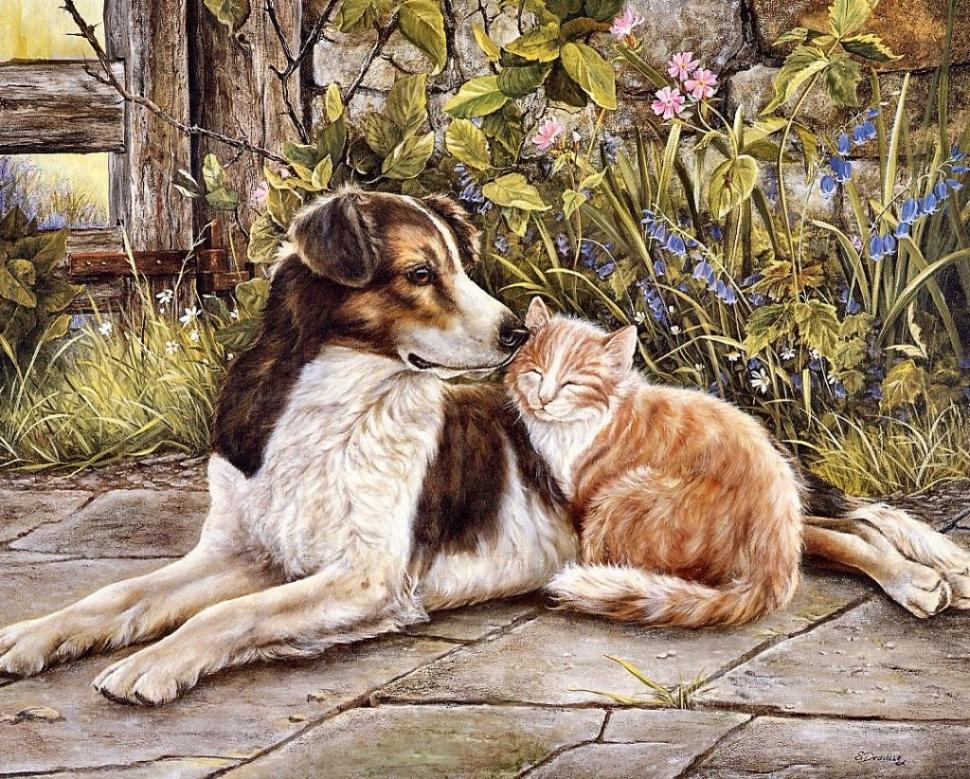 Картинку, картинки на тему собаки и кошки